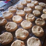 Homestyle Biscuits- Perfect for the freezer